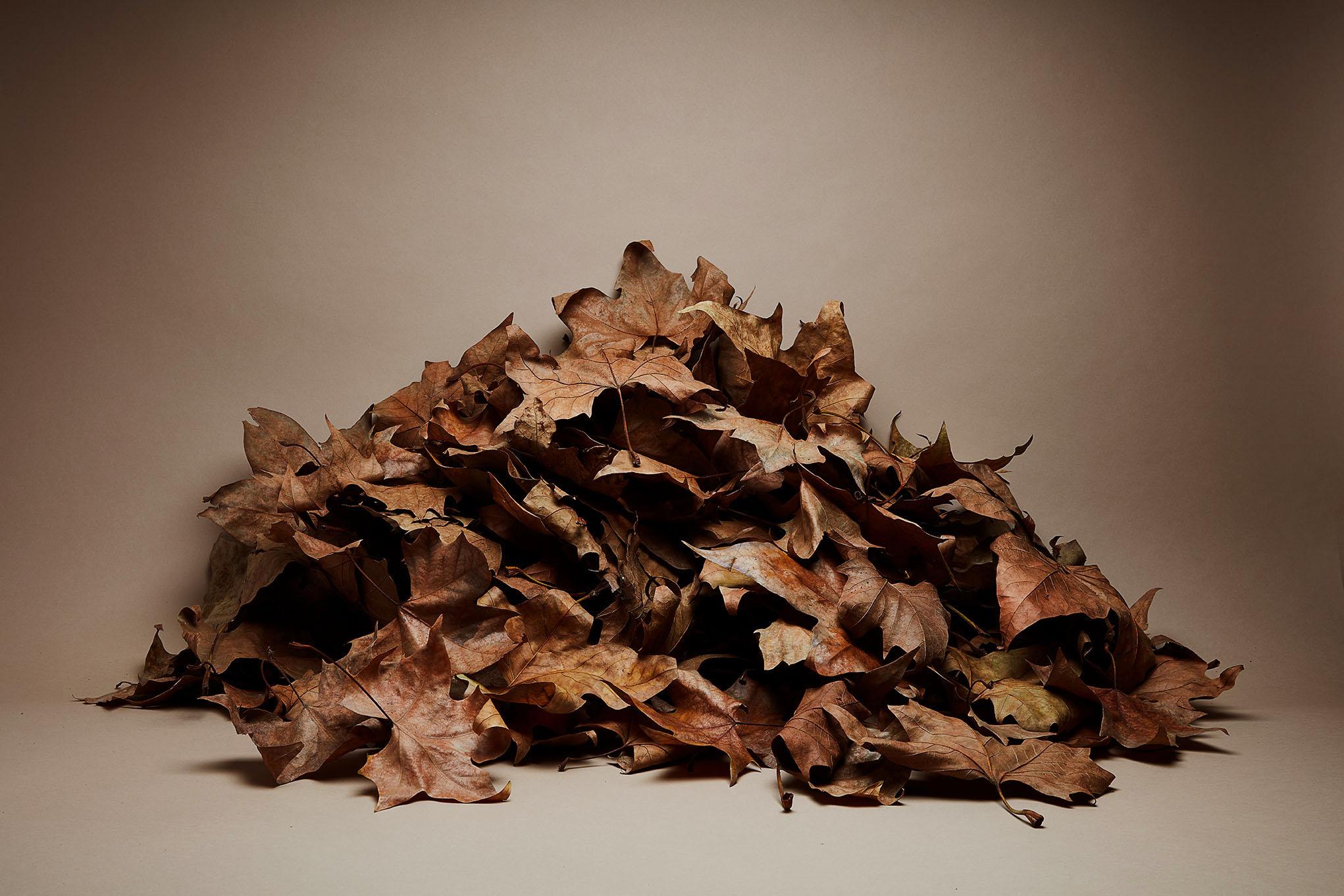 Maroquinerie d'automne