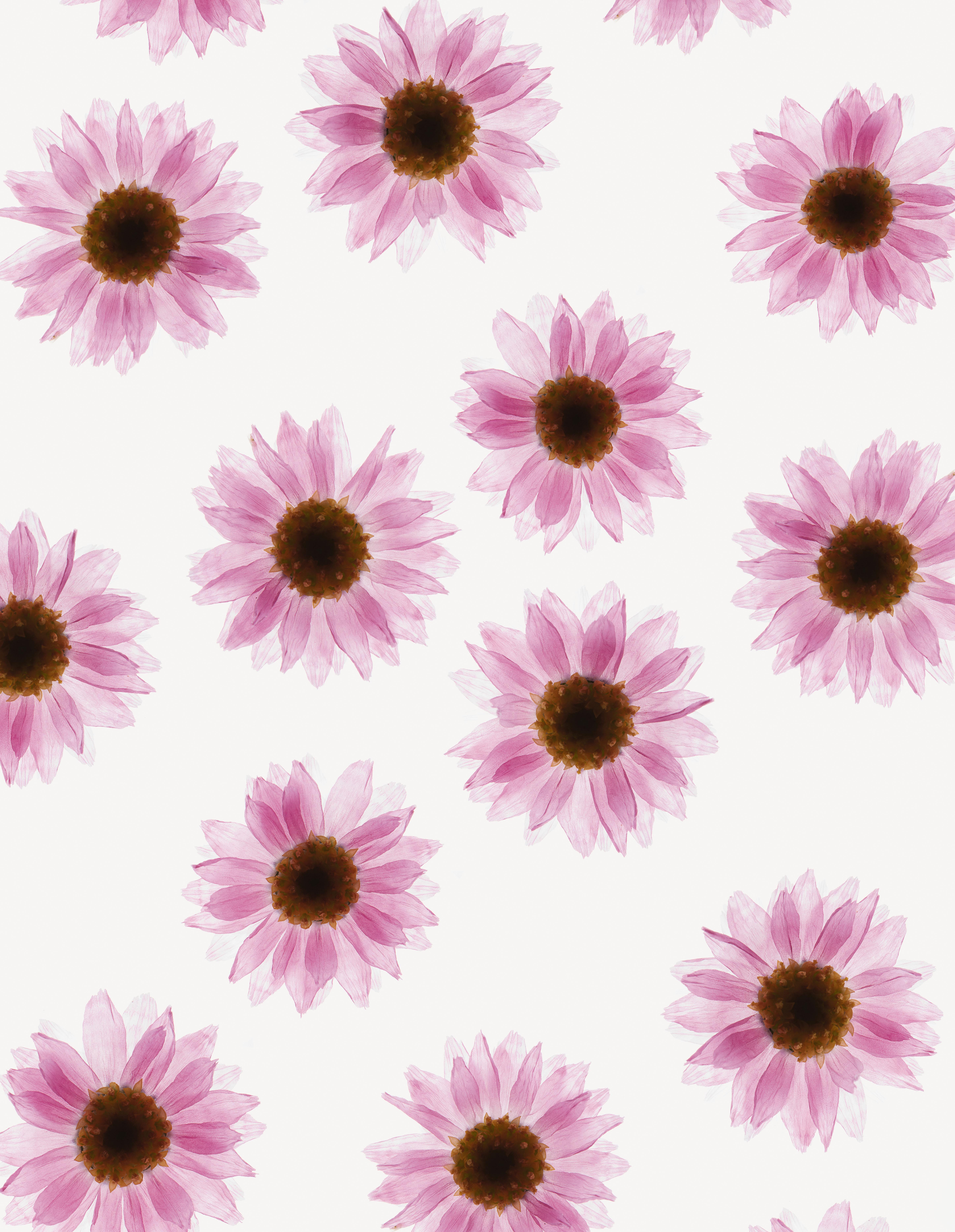 Fleurs Hermetica : Immortelles