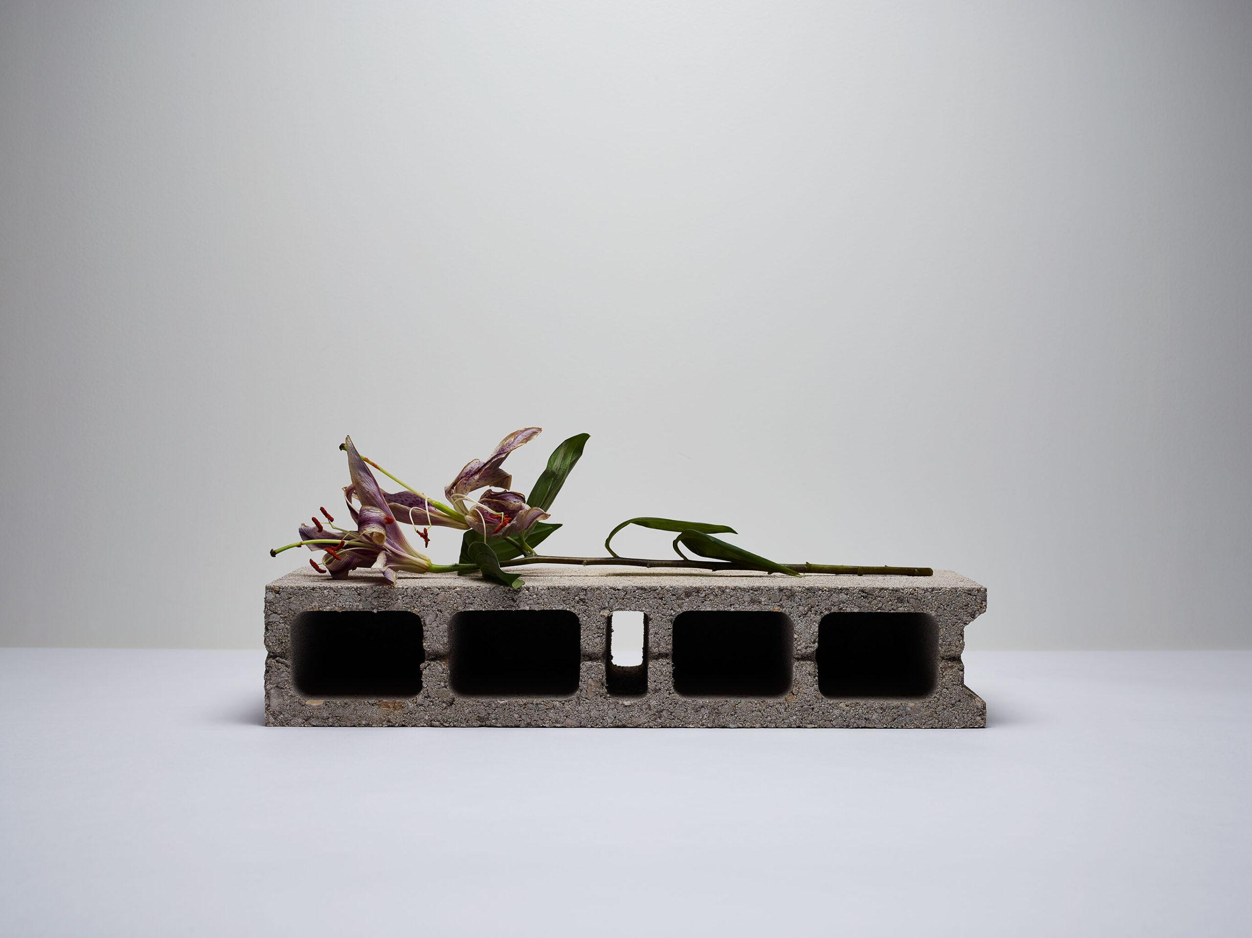 Fleurs concretes No.81