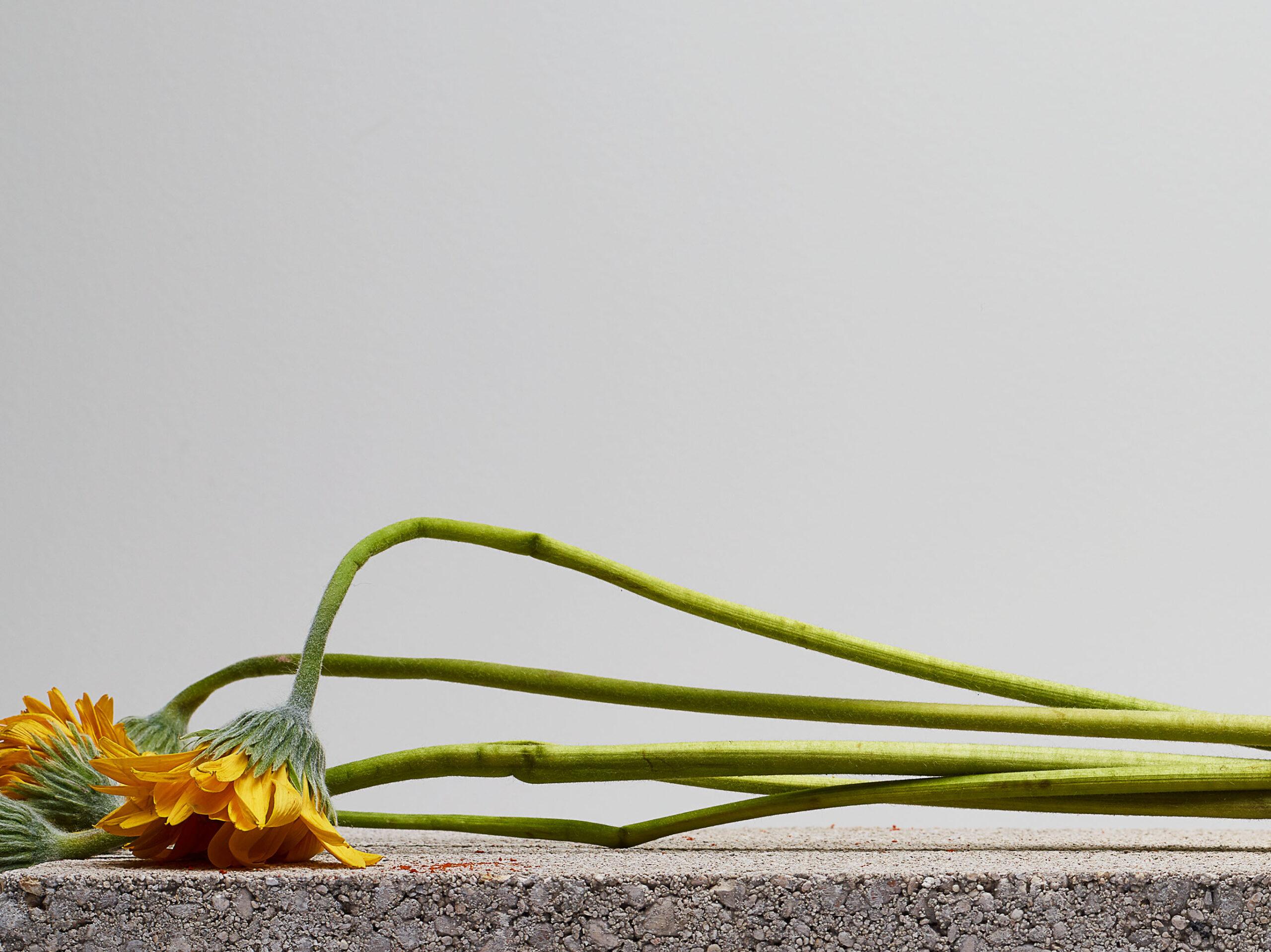 Fleurs concretes No.08