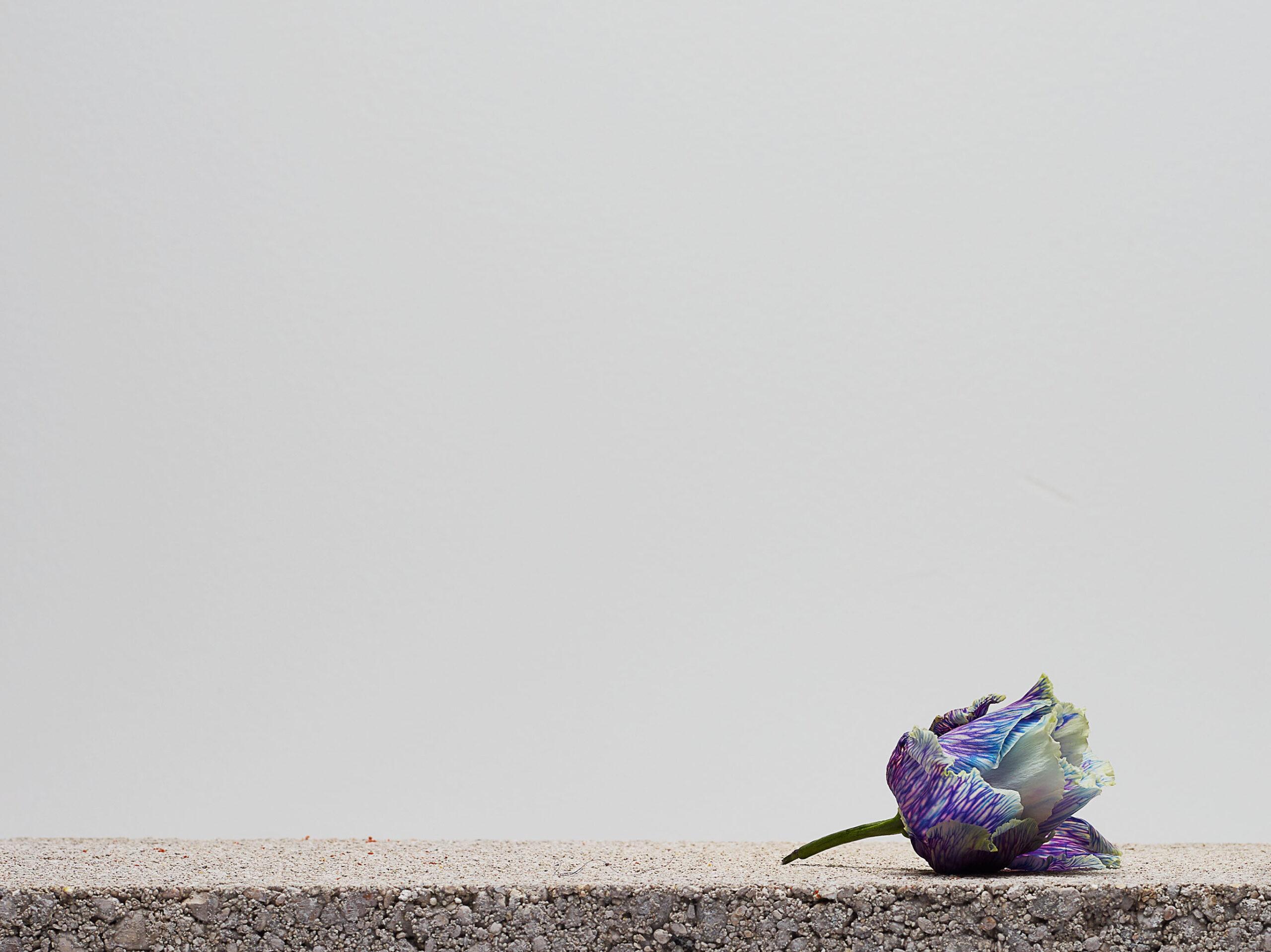 Fleurs concretes No.19